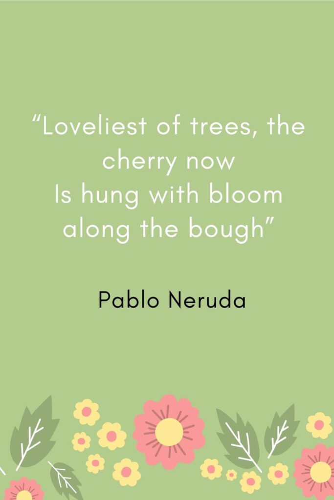 """Loveliest of trees the cherry now Is hung with bloom along the bough"""""""