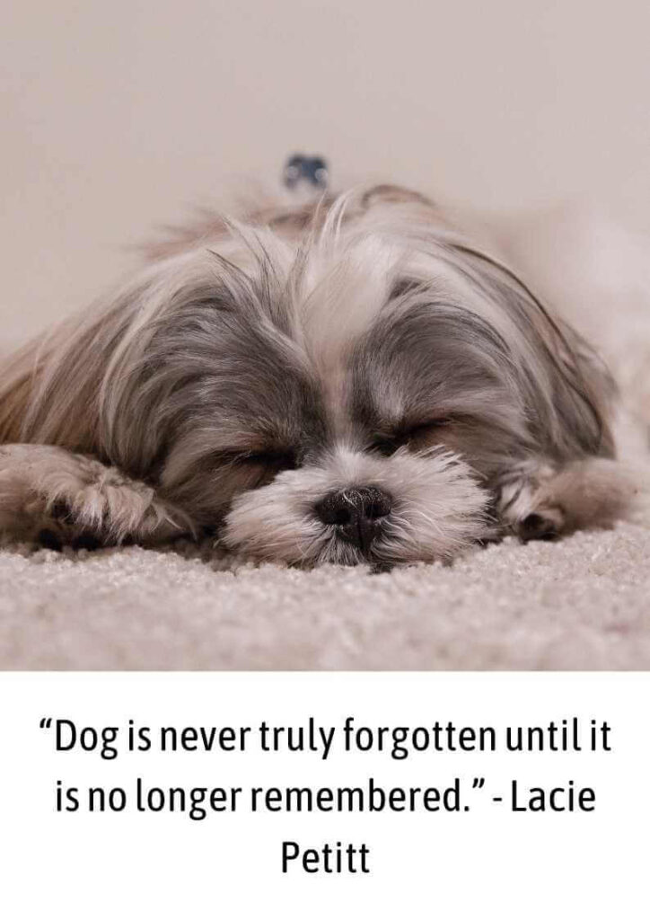 dog died quotes