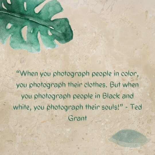 best still life photography quotes