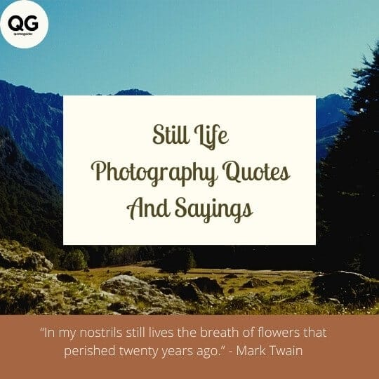 still life photography quotes